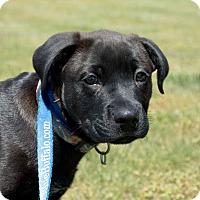 Adopt A Pet :: Jimi $250 - Seneca, SC