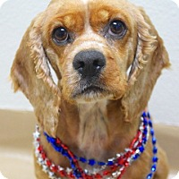 Adopt A Pet :: Wendy - Dublin, CA