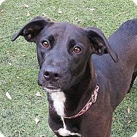 Adopt A Pet :: Trudy - Summerville, SC