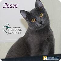 Adopt A Pet :: Jesse - Covington, LA