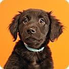 Adopt A Pet :: Fluffies Blake