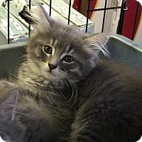 Adopt A Pet :: Zeus - Thornhill, ON
