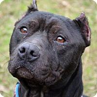 Adopt A Pet :: Blackjack - Ridgeland, SC