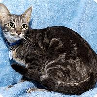 Adopt A Pet :: Aggie - Mt. Prospect, IL