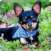 Adopt A Pet :: Carlos - Albany, NY