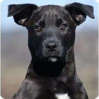 Adopt A Pet :: Baron - Providence, RI
