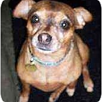 Adopt A Pet :: Miss Daisy - Summerville, SC