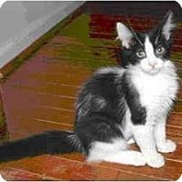 Adopt A Pet :: Andi - Colmar, PA