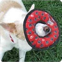 Adopt A Pet :: McRae - Conyers, GA