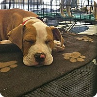 Adopt A Pet :: Mariah - Phoenix, AZ