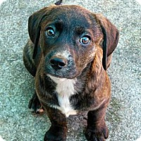 Adopt A Pet :: Grant - maryville, TN