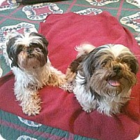 Adopt A Pet :: Mary Kate and Ashley - Mocksville, NC