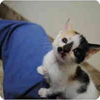 Adopt A Pet :: Lorna - Secaucus, NJ