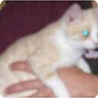 Adopt A Pet :: Porthos - Fayette, MO
