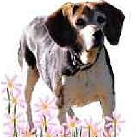 Adopt A Pet :: Kammi - Portland, OR