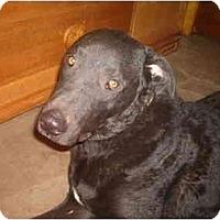 Adopt A Pet :: Logan - North Jackson, OH