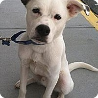Adopt A Pet :: Luke - Raritan, NJ