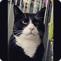 Adopt A Pet :: Louie - Raritan, NJ