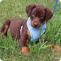 Adopt A Pet :: Mickey - Bedford, VA