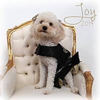 Adopt A Pet :: Joy - Metairie, LA