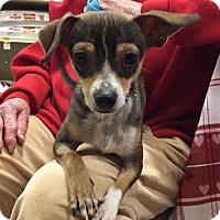Adopt A Pet :: Rudolph - Irving, TX