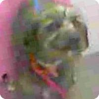 Adopt A Pet :: Melia - Boulder, CO