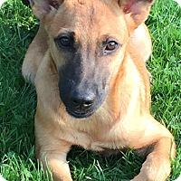 Adopt A Pet :: Breeze - Joliet, IL