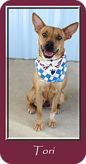 Australian Cattle Dog Mix Dog for adoption in Hillsboro, Texas - Tori