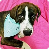 Adopt A Pet :: PUPPY-SHASHA - DeLand, FL