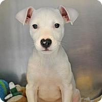 Adopt A Pet :: Leo - Suwanee, GA