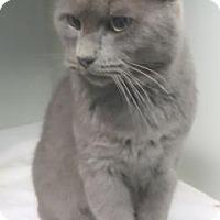 Adopt A Pet :: Smokey Robinson $20 - Lincolnton, NC