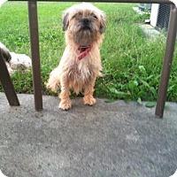 Adopt A Pet :: Lil Boy - Willingboro, NJ