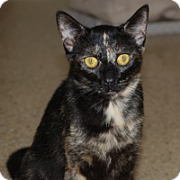 Adopt A Pet :: Jasmine - Orange, CA