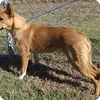 Adopt A Pet :: Amber - Olive Branch, MS
