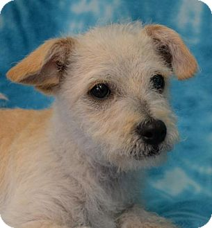 Terrier (Unknown Type, Medium) Dog for adoption in Eureka, California - Rocky