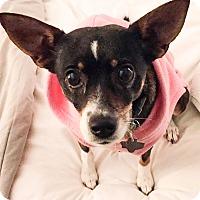 Adopt A Pet :: Tilly - Arlington, TX