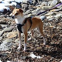 Adopt A Pet :: Ohdee - Gardnerville, NV
