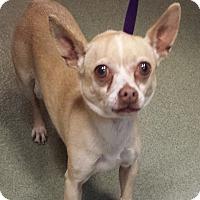Adopt A Pet :: Ramona - Westminster, CA
