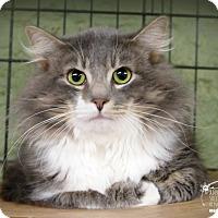 Adopt A Pet :: Lakota - Marlinton, WV