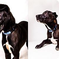 Adopt A Pet :: Shane - Laredo, TX