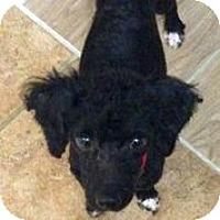 Adopt A Pet :: Pierre - Austin, TX