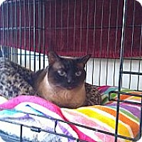 Adopt A Pet :: Paige - Brea, CA