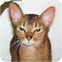 Adopt A Pet :: Rudy - Davis, CA