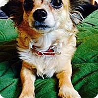 Adopt A Pet :: Sweets - Scottsdale, AZ