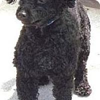 Adopt A Pet :: Pepe - Gilbert, AZ