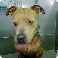 Adopt A Pet :: CALI - Valley Village, CA
