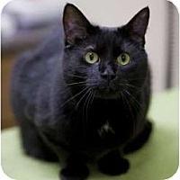 Adopt A Pet :: Charo - Chicago, IL