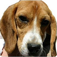 Adopt A Pet :: Butch - Portland, OR