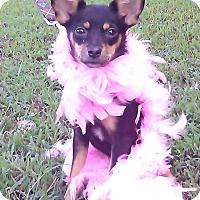 Adopt A Pet :: Montana - Hollis, ME