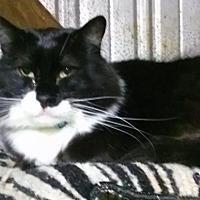 Adopt A Pet :: Horshack - Pasadena, CA